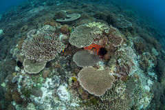 Corals Growing on Reef Royalty Free Stock Photos