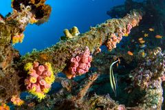 Ship Wreck in maldives indian ocean. Corals growing on Ship Wreck underwater while diving royalty free stock image