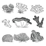 Corals hand drawn vector illustrations. Ocean plants and coral reef elements isolated on white background Stock Photo