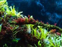 Free Corals In The Park In The Aquarium Stock Photos - 168353443