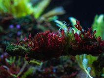 Free Corals In The Park In The Aquarium Royalty Free Stock Photography - 168353557