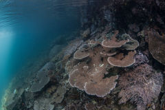 Corals on Island Slope Stock Images
