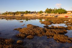 Corals for large  tide, Nusa Penida, Indonesia Stock Photo