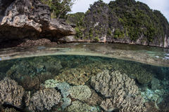 Corals and Limestone Islands Royalty Free Stock Photos