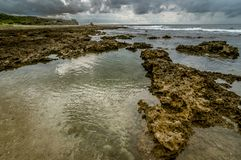 Corals at low tide Royalty Free Stock Image