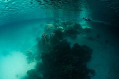Corals, Marine Lake, and Snorkeler Royalty Free Stock Photos