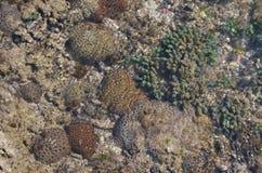 Corals. Near an island in gujurat Royalty Free Stock Photos