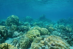 Corals on the ocean floor Pacific French Polynesia Royalty Free Stock Photos
