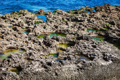 Corals on the ocean shore Stock Images
