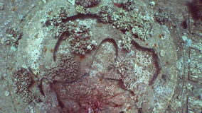 Corals on part of sunken ship Salem Express close up underwater in Red Sea. stock footage