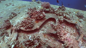 Corals on part of sunken ship Salem Express close up underwater in Red Sea. Extreme tourism on ocean floor in world of coral reefs, fish, sharks. Researchers stock footage