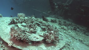 Corals on part of sunken ship Salem Express underwater in the Red Sea in Egypt. Extreme tourism on ocean floor in world of coral reefs, fish, sharks stock footage