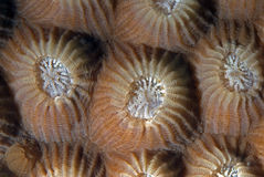 Corals in reproduction Royalty Free Stock Photos