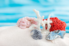 Corals  in sand Stock Photo