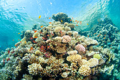 Corals in the sea Royalty Free Stock Photography