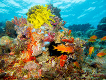 Corals and sea life. Colorful group of corals and fishes in the maldives Royalty Free Stock Images