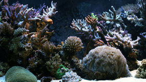 Corals. Sea corals from the Pacific Ocean Stock Photo