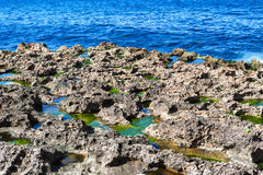 Corals on the sea shore Royalty Free Stock Photo