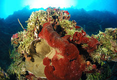 Corals and sea sponges Royalty Free Stock Photos