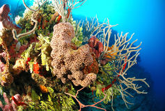 Corals and sea sponges Stock Photo