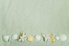 Corals and seashells on sand Stock Photo