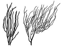 Corals. Set of two coral silhouettes black on white Royalty Free Stock Image