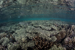 Corals in Shallow Seas Stock Image