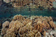 Corals in Shallow Water Stock Images