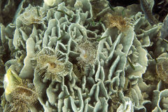 Corals in shallow waters. During low tide off the coast , Thailand royalty free stock photography