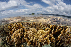 Corals in Shallows Royalty Free Stock Photos