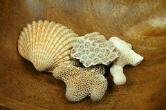 Corals and shell. Fragments of corals and beautiful shell in wooden bowl. Sea life Royalty Free Stock Photography