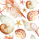 Corals with shells and crabs royalty free illustration