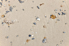 Corals and shells in the sand Stock Photo