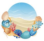 Corals and shells on the sand background Stock Image