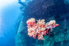 Corals on Ship Wreck. Ship Wreck underwater while diving stock photo