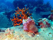 Corals of the South-Chinese sea Stock Image