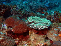 Corals of the South-Chinese sea Royalty Free Stock Photo