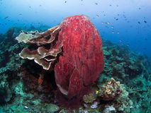 Corals and sponges Stock Photography