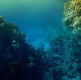 Corals is in sunbeams. Egypt, Red sea Stock Photography
