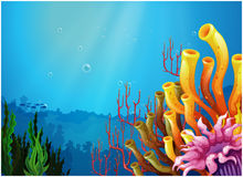 Corals under the sea royalty free illustration