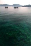 Corals under sea , Thailand Royalty Free Stock Photos