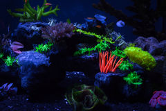 Corals under water. Bright colorful corals on the bottom under the water Royalty Free Stock Images