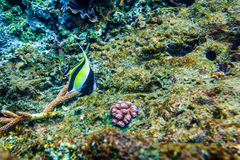 Corals underwater and beautiful tropical fish in the Indian Ocean Stock Image