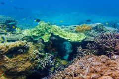 Corals underwater and beautiful tropical fish in the Indian Ocean Royalty Free Stock Photo