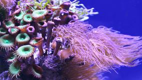 Corals in underwater tropical sea stock video