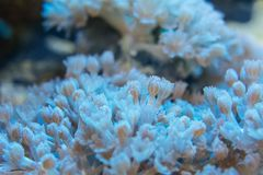 Corals are very close Royalty Free Stock Image