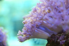 Corals are very close Royalty Free Stock Photos
