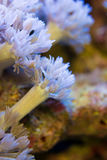 Corals are very close Royalty Free Stock Photography