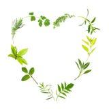 Coração da folha da erva Fotografia de Stock Royalty Free