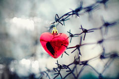 Coração e arame farpado Imagens de Stock